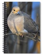 Mourning Dove On Limb Spiral Notebook