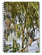 Mourning Doves Landing In Eucalyptus  Spiral Notebook