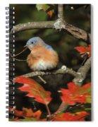 Mr Bluebird Spiral Notebook