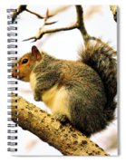 Mr Fat And Sassy Spiral Notebook