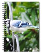 Mr Jay Spiral Notebook
