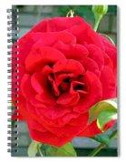 Mr Lincoln Rose Spiral Notebook