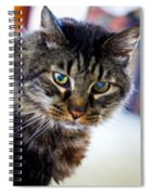 Mr. Lynx - Tabby - Cat Spiral Notebook