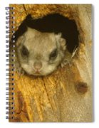 Mr Squirrel Answers The Door  Spiral Notebook