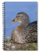 Mrs. Mallard Spiral Notebook