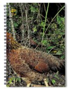 Ms. Chicken Spiral Notebook