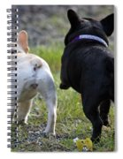 Ms. Quiggly And Buddy French Bulldogs Spiral Notebook