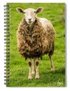 Mt Angel Abbey Sheep - Oregon Spiral Notebook