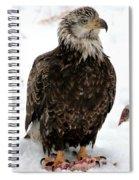 Mudhen Spiral Notebook