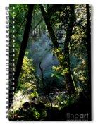 Muir Woods Spiral Notebook
