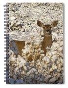 Mule Deer   #0061 Spiral Notebook