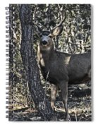 Mule Deer Buck Spiral Notebook