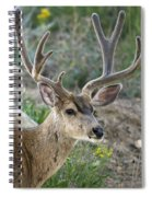 Mule Deer Buck In Velvet Spiral Notebook
