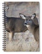 Mule Deer Does Spiral Notebook