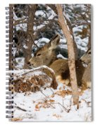 Mule Deer In Snow Spiral Notebook