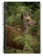 Mule Deer On Alert Spiral Notebook