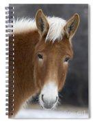 Mule Spiral Notebook