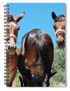 Mules On Alonissos Island Spiral Notebook