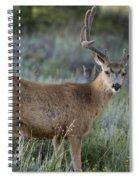 Muley Buck In Velvet Spiral Notebook