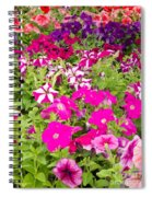 Multi-colored Blooming Petunias Background Spiral Notebook
