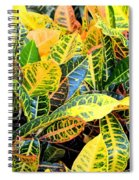 Multi-colored Croton Spiral Notebook