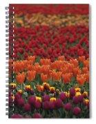 Multi-colored Tulip Fields  Spiral Notebook