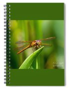 Multicolored Dragonfly Spiral Notebook