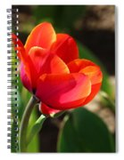 Multicolored Tulip Spiral Notebook