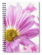 Mums Flowers Against A White Background Spiral Notebook