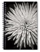 Mum's The Word Spiral Notebook