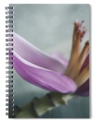 Musa Ornata - Pink Ornamental Banana Flower - Kepaniwai Maui Hawaii  Spiral Notebook