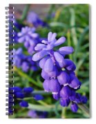 Muscari Spiral Notebook
