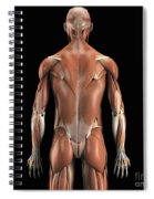 Muscles Of The Upper Body Rear Spiral Notebook
