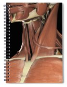 Muscles Of The Upper Chest And Neck Spiral Notebook