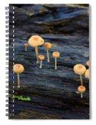 Mushrooms Amazon Jungle Brazil 4 Spiral Notebook