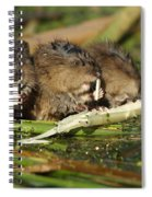 Muskrat Trio Spiral Notebook