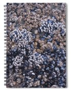 Mussels And Barnacles, Low Tide Spiral Notebook