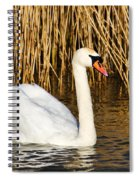 Mute Swan By Reed Beds Spiral Notebook