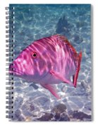 Mutton Encounter Spiral Notebook