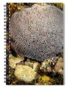 My Brain Underwater Spiral Notebook