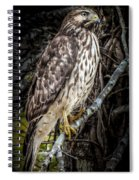 My Hawk Encounter Spiral Notebook