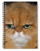 My Old Friends Spiral Notebook