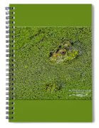 My Whole World Is Green Spiral Notebook