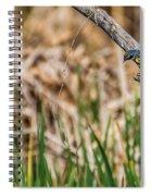 Myrtle Warbler Colors Spiral Notebook