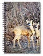 Mystic Duo Spiral Notebook