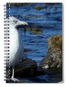 Mystic Seagull Spiral Notebook