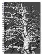 Naked And Barren Spiral Notebook