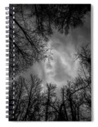 Naked Branches Spiral Notebook