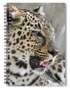 Naples Zoo - Leopard Relaxing 1 Spiral Notebook