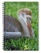 Napping Sandhill Baby Spiral Notebook